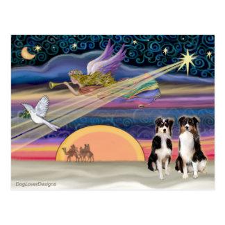 Christmas Star - Australian Shepherds (two tri) Postcard