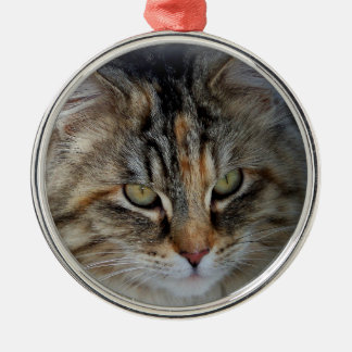 Christmas Tabby Feral Cat Potrait Metal Ornament