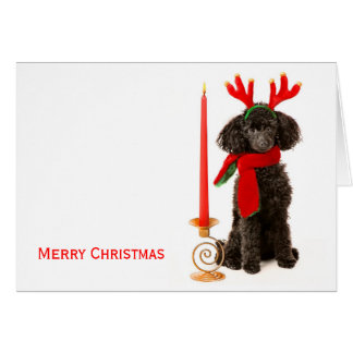 Christmas Toy Poodle Dog Card