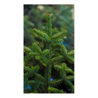 christmas tree branches pack of standard business cards