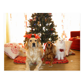 Christmas White Cat with Dogs   Christmas Tree Postcard