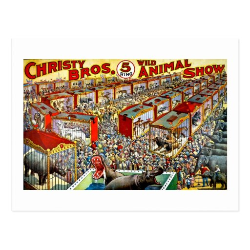 Christy's Wild Animal Show - Vintage Postcards