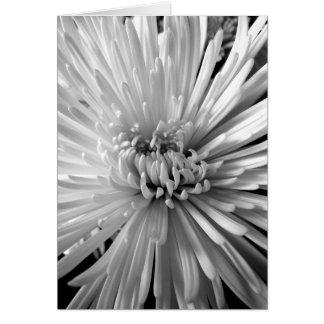Chrysanthemum Blossom Card
