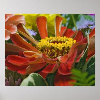Chrysanthemum flower poster