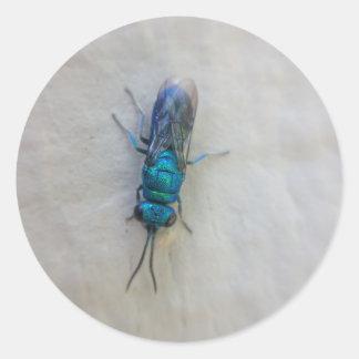 Chrysididae - cuckoo wasp classic round sticker