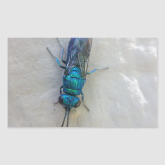 Chrysididae - cuckoo wasp rectangular sticker