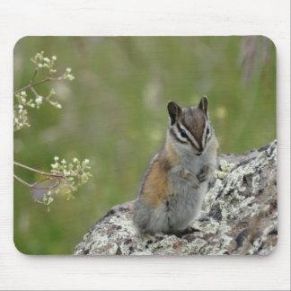 chubby cute chipmunk on rock mousepad