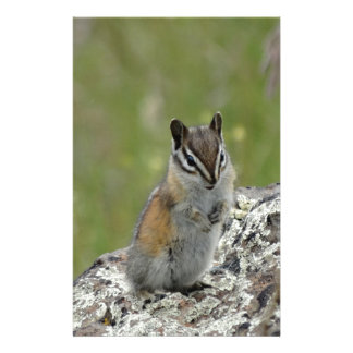 chubby cute chipmunk on rock customized stationery