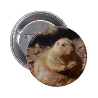 Chubby Prairie Dog Button