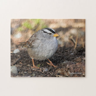 Chubby White-Crowned Sparrow in the Winter Sun Jigsaw Puzzle