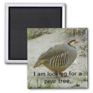 Chukar Partridge game bird hunting sport Square Magnet