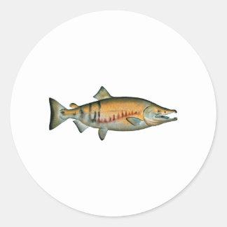 Chum Salmon (spawning phase) Classic Round Sticker