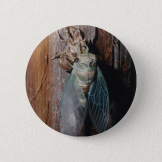 Cicada dries his wings 6 cm round badge