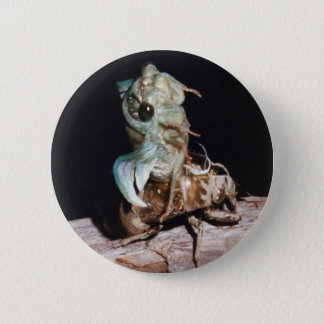 Cicada Emerging from Shell 6 Cm Round Badge