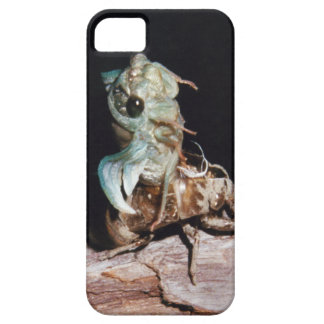 Cicada Emerging from Shell iPhone 5 Cases