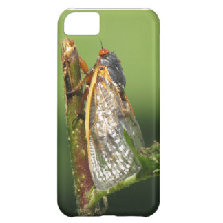 Cicada iPhone 5C Case