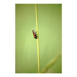Cicada Photo Art