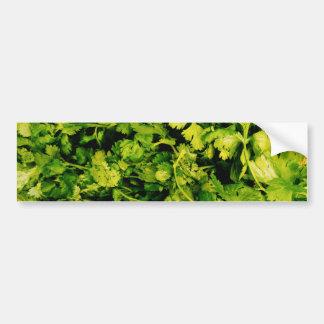 Cilantro / Coriander Leaves Bumper Sticker