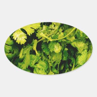 Cilantro / Coriander Leaves Oval Sticker