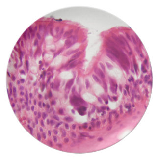 Ciliated epithelium under the microscope. plate