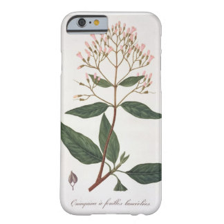 Cinchona from Phytographie Medicale by Joseph Ro iPhone 6 Case
