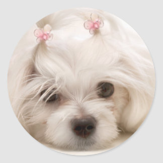 Cindy Classic Round Sticker