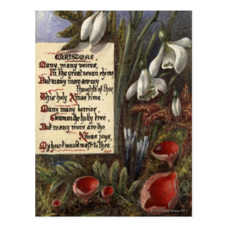 Circa 1890: Snowdrops Postcard