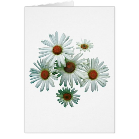 Circle of Daisies Card