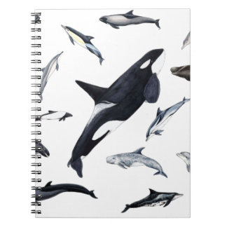 Circle of dolphins notebooks
