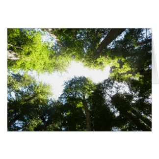 Circle of Redwood Trees in Redwood National Park Greeting Card