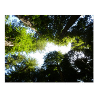 Circle of Redwood Trees in Redwood National Park Postcard