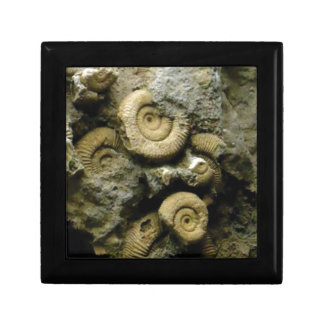 circles of fossil snails gift box