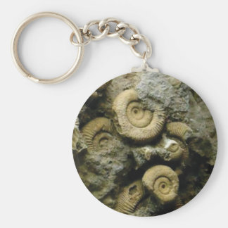circles of fossil snails key ring