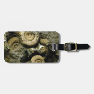circles of fossil snails luggage tag