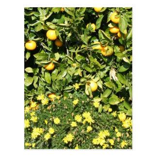 Citrus and Euryops Postcard