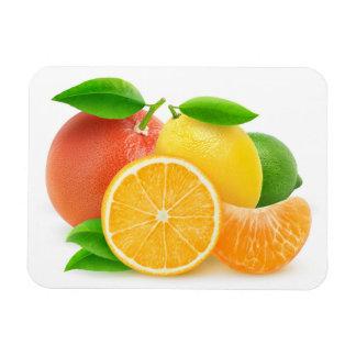 Citrus fruits rectangular photo magnet