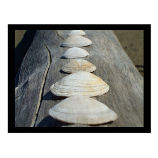 Clam Shells Postcard
