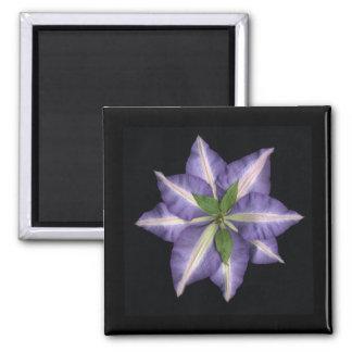 Clamatis 2 square magnet