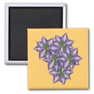 Clamatis 4 square magnet
