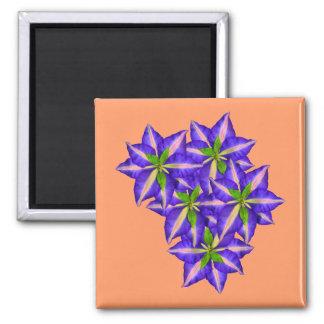 Clamatis 6 magnet