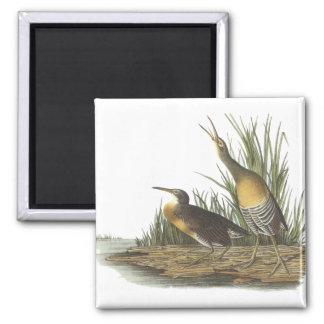 Clapper Rail, John Audubon Refrigerator Magnet