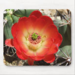 Claret Cup Cactus Blossom Mouse Pad