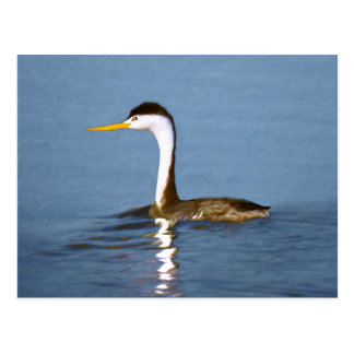 Clark's Grebe Painting - Original Bird Art Postcard