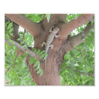 Clark's Spiny Lizard in a Tree Photo Print