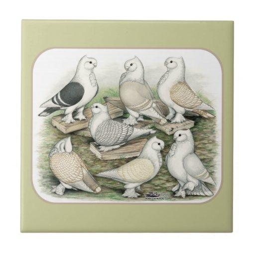 Classic Frill Pigeons Satinettes Ceramic Tile