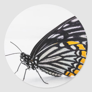 Classic Round Sticker, Glossy - Butterfly Macro Classic Round Sticker