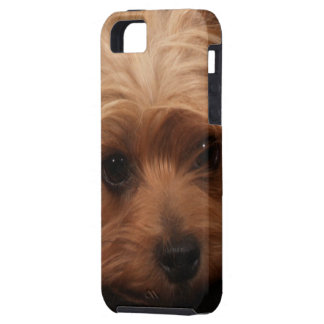 Classic Yorkie Pouty Face iPhone 5 Cases