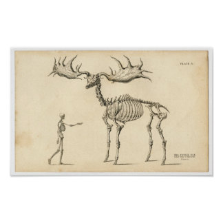 Classic Zoological Etching - Ancient Elk & Human Poster