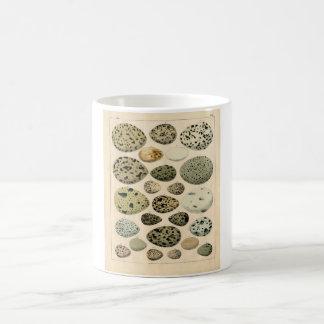 Classic Zoological Etching - Bird Eggs Coffee Mug