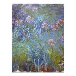 Claude Monet Agapanthus Photo